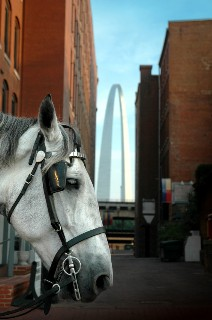 Gateway Arch Tour by Horse